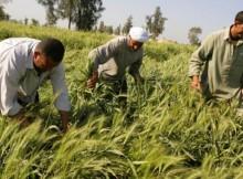 AGRICOLTURA,FAVA:POSSIBILE UNA MISSIONE IN IRAN CON NOSTRE IMPRESE